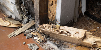 Spray Foam & Termites: What's All the Fuss?