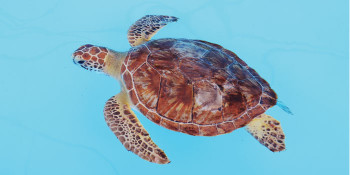Don't be Shellfish – Help Save the Turtles